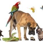 pet types