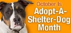 adopt-a-shelter