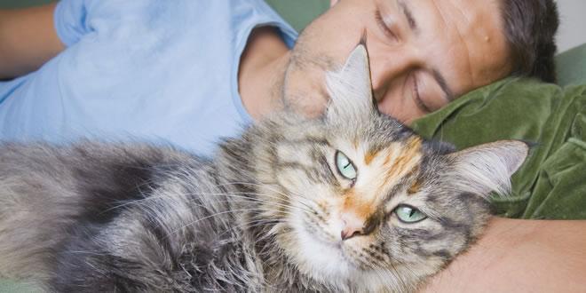 cat-pets