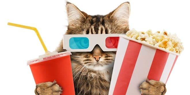 pet-entertainment
