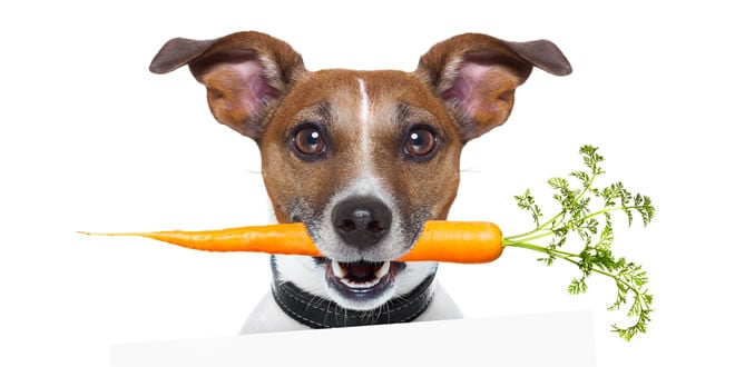 Dog Breaking Out On Raw Food